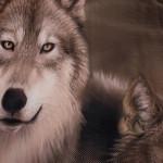 3D луксозен детски комплект с Вълци